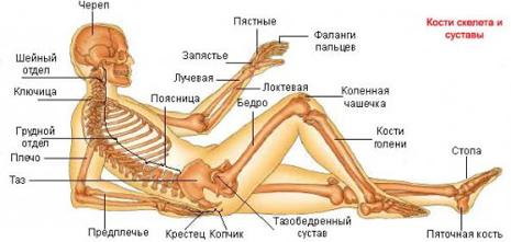 Что такое остеопороз костей